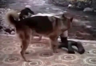 Wife and dog fuck like crazy rabbits